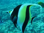 Aitutaki, © TripAdvisor