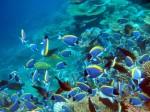 Malediven, © TripAdvisor