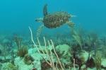 St.Maarten, © TripAdvisor