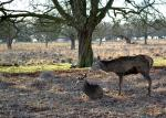 4 Richmond Park ©TripAdvisor