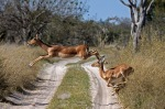 Botswana, ©TripAdvisor