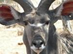Botswana2, ©TripAdvisor