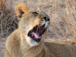 Botswana_1, ©TripAdvisor