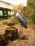 Frankfurter Zoo ©TripAdvisor