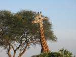Kenia, ©TripAdvisor