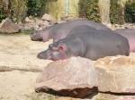 Kölner Zoo ©TripAdvisor