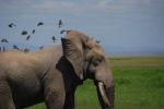 Kenia_Elefant, ©TripAdvisor