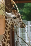 Zoo Leipzig ©TripAdvisor