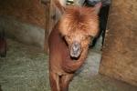 Zoo Salzburg ©TripAdvisor
