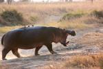 tanzania-safari, ©TripAdvisor