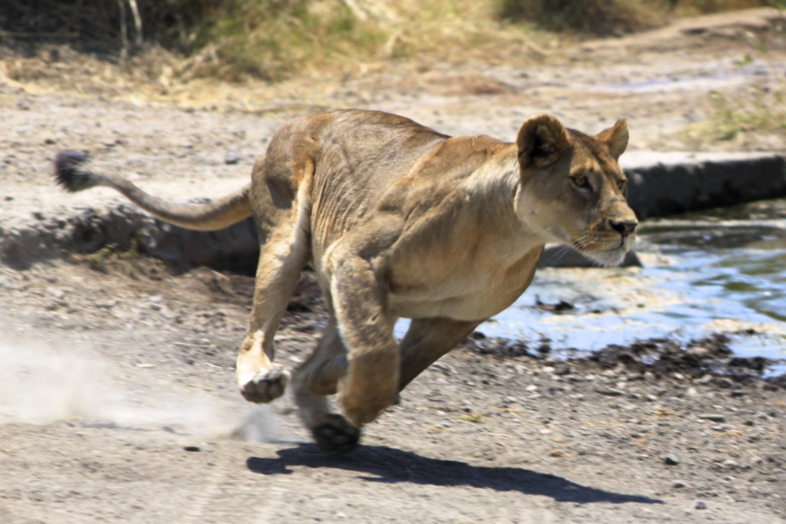 ... in serengeti tripadvisor tanzania5 tripadvisor botswana 4 tripadvisor