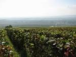 Champagne-Ardenne ©TripAdvisor